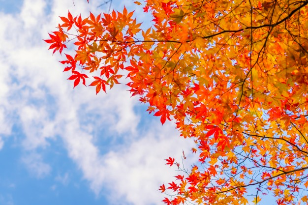 Fall injuries: tips on how to prevent them